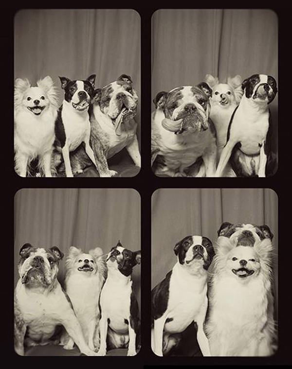 Photo-Booth-Dogs