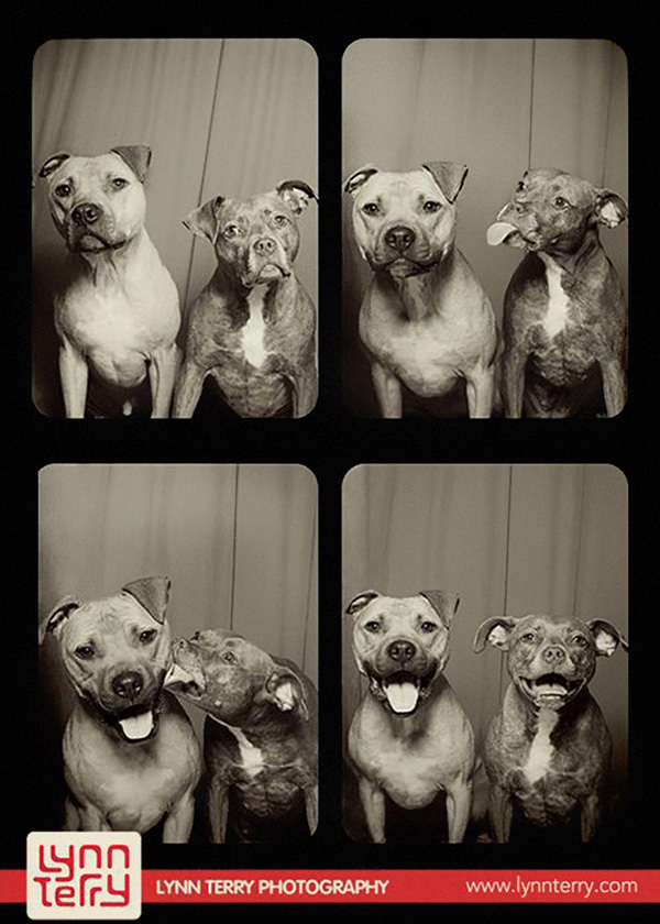 Photo-Booth-Pit-Bulls