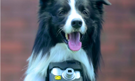 Friday Fun: Fido gets a New Toy and it's Spelled N-I-K-O-N